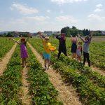 sechs Personen auf einem Erdbeerfeld